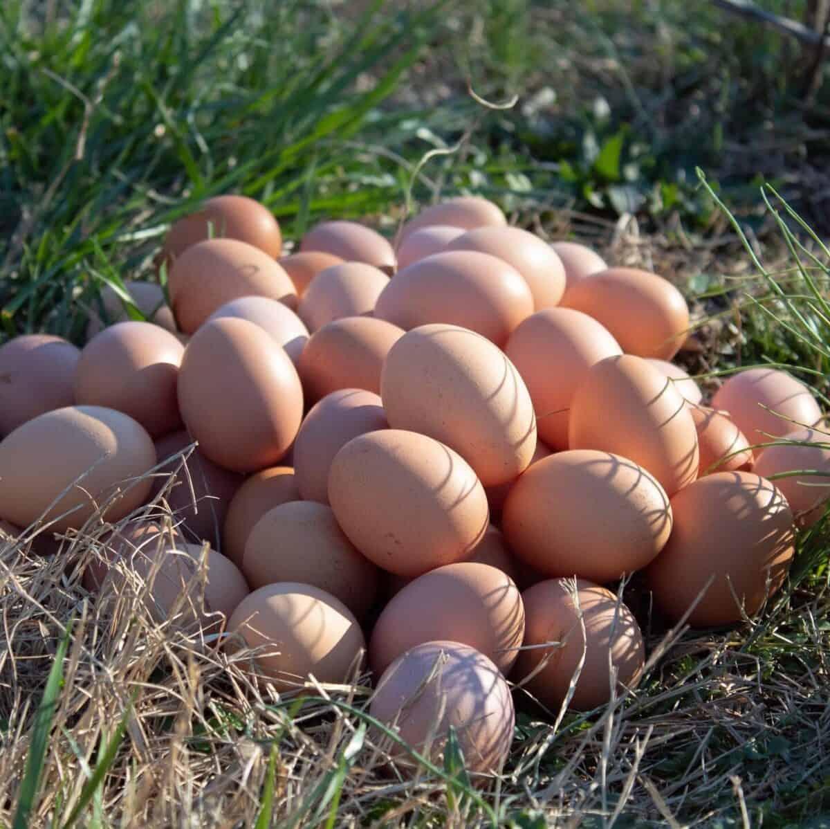 Eggcited for the season!