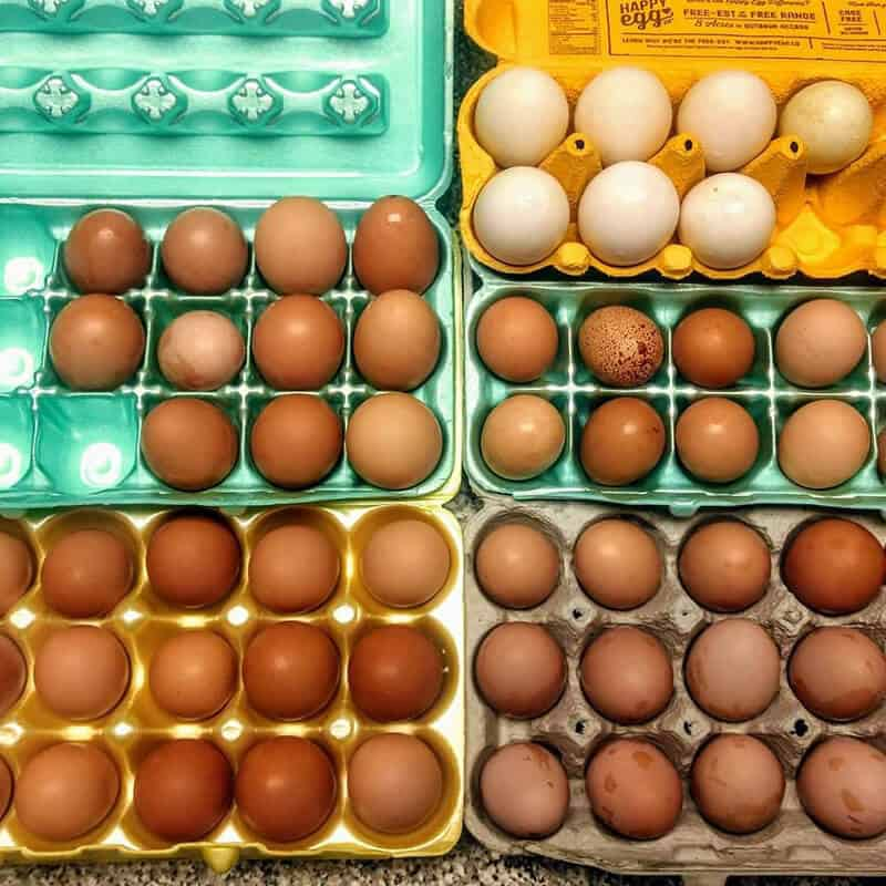 Bad Back Acres Eggs in Cartons