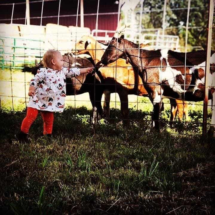 Ocoee Creamery little girl and goats