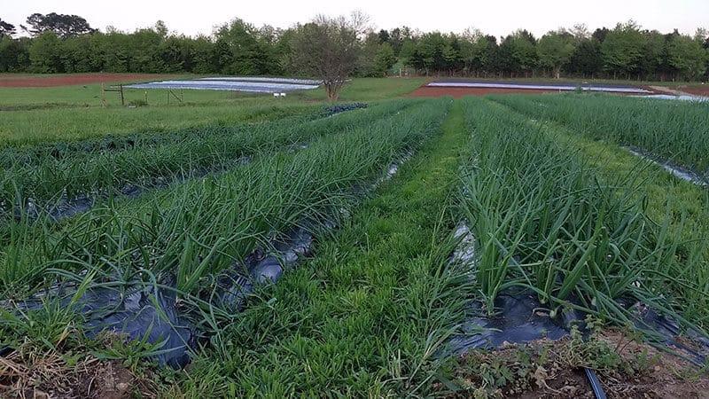 White Oak Valley Farm planted field