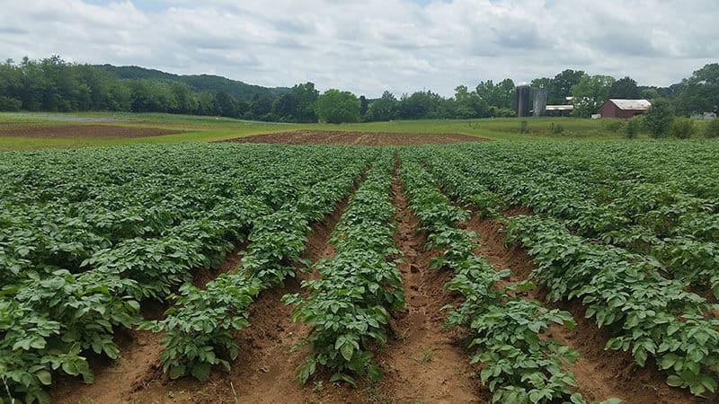 White Oak Valley Farm planted rows