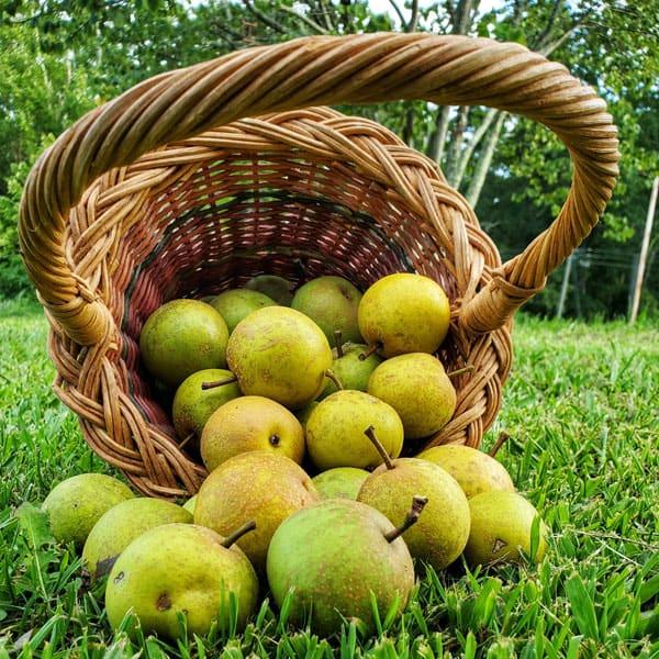 Bird Fork Farm basket of apples