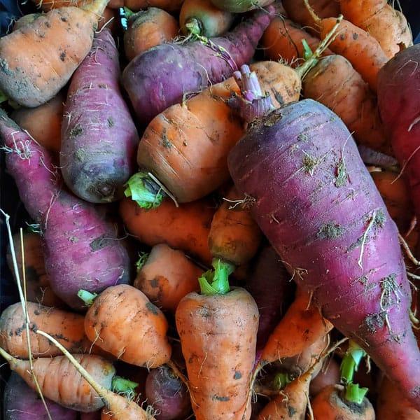 Bird Fork Farm root veggies